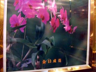 金日成花の画像 p1_23